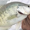 Think Truman Lake for Crappie