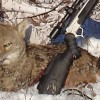 Predator Hunting by the Numbers