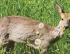 22 Counties End CWD Management