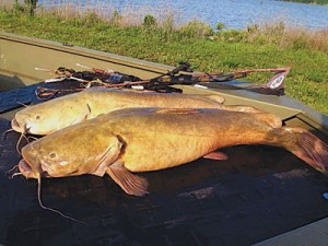 A better limb line system outdoor guide magazine for What does cat fishing mean